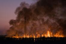 Burning Sugarcane