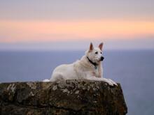 Dog Ocean