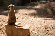 View From The Back Of A Meerka...