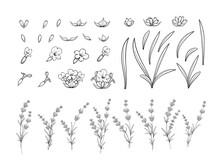 Set Of Lavender Flowers Outline Elements.