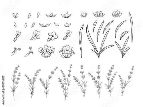 Set of lavender flowers outline elements. Wallpaper Mural
