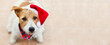 Happy cute jack russell terrier santa christmas holiday pet dog puppy smiling, listening. Web banner with copy space.