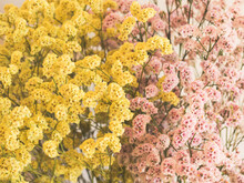 Dried Pink And Yellow Flowers ...