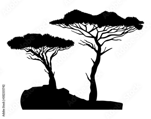 Fototapeta Black silhouette of two trees baobabs with bush