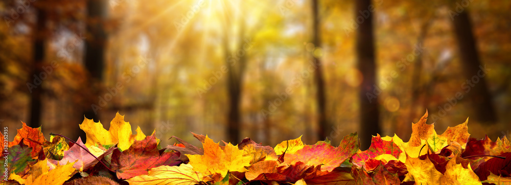 Fototapeta Closeup of autumn leaves on the ground in a forest, defocused trees with golden foliage and beautiful rays of sunlight in the background