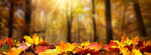Closeup Of Autumn Leaves On Th...