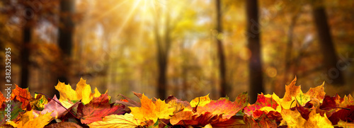 Closeup of autumn leaves on the ground in a forest, defocused trees with golden foliage and beautiful rays of sunlight in the background  - 382352935