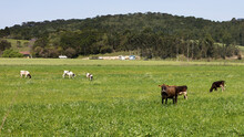 Paisagem Rural Com Pasto Verde...
