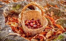 Chestnuts Background - Harvest...