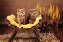 Zwei Süße Katzenkinder Im He...