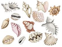 Watercolor Set Of Seashells On...