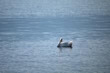Swan On The Water,wildlife,nature,white, Lake, Animal,