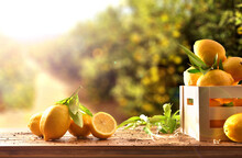 Crate Of Freshly Picked Lemons On Wooden Table In Field