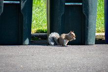 A Squirrel Eating In A Driveway In Front Of A Trash Can