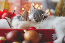 Adorable Two Kittens Sleeping On Cozy Santa Hat With Red And Gold Baubles In Christmas Lights