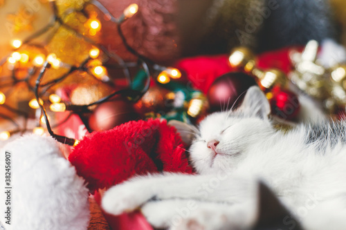 Fototapeta Cute kitten sleeping on cozy santa hat with red and gold ornaments with warm festive lights obraz