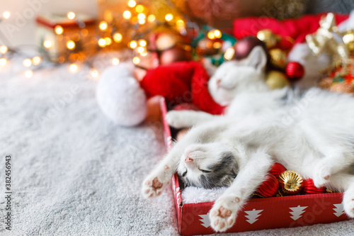 Fototapeta Adorable kittens sleeping on cozy santa hat with red and gold baubles in festive lights obraz