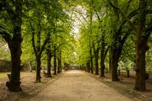 Alameda, Jardim  Botânico De ...