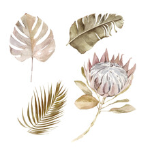 Old Dry Swirling Tropical Leaves And Flower Watercolor Vector Illustration Isolated On The White Background. Closeup View Palm Leaf In Boho Style. Hand Drawn Leaves And Protea In Sepia Color Scheme.