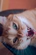 canvas print picture - feline