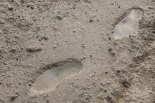 雨上がりのぬかるみの足跡