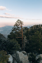 Trees And Mountain Boulders At Top Of Mt. San Jacinto