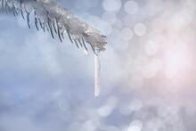 Winter Branch On Glittering Bl...