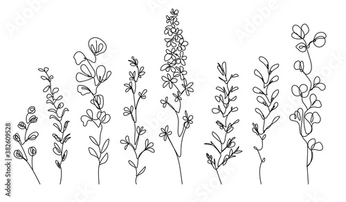 Continuous Line Drawing Set Of Plants Black and White Sketch of Flowers Isolated on White Background. Leaves Eucalyptus One Line Illustration. Vector EPS 10.