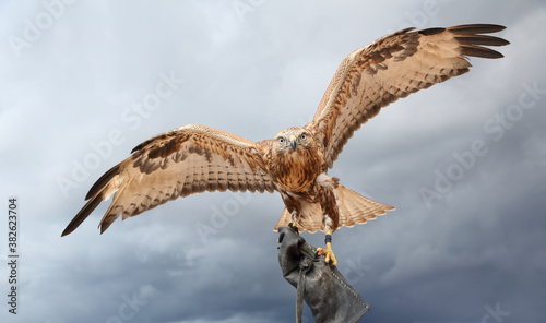 Cuadros en Lienzo a large bird of prey