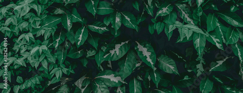 tropical leaves, abstract green leaves texture, nature background - 382624934