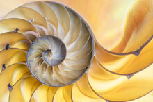 Detail Of Nautilus Spiral Shell