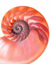 Red Detail Of Nautilus Spiral ...