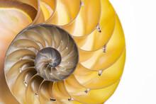 Detail Of Nautilus Spiral Shel...