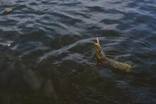 Summer Fishing, Pike Fishing, ...