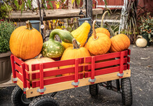 Red Wagon Filled With Pumpkins...