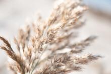 Soft Beige Beach Reed Background