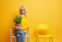 Mature Beautiful European Woman Holds Cactus In Pot Takes Care Of Home Flowers Lives Alone Poses On Comfortable Chair Against Yellow Background Looks Serious At Camera Memorizes Past Days Feels Lonely