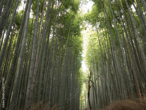 Bosque de Bambú, en el barrio de Arashiyama, en Kioto, Japón