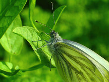 Macro Of A White Butterfly On ...