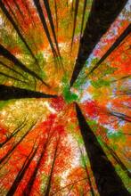 Image Of Colorful Leaves Falli...