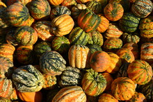 Different Squashes And Pumpkin...