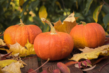 Three Ripe Pumpkins With Autum...