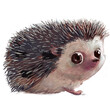 cute little watercolor cartoon hedgehog