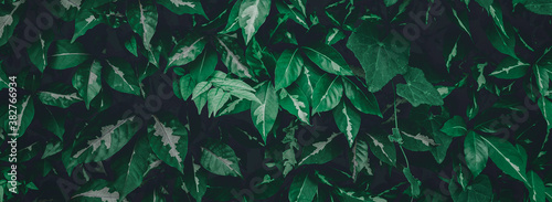 tropical leaves, abstract green leaves texture, nature background - 382766934