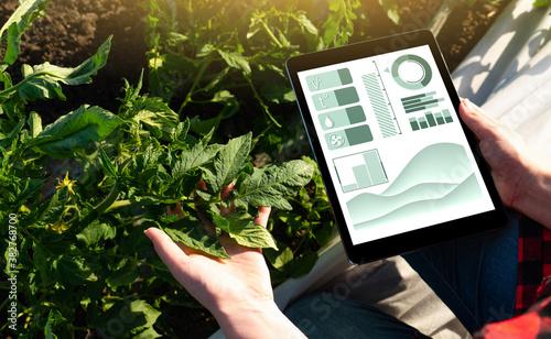 Fototapeta Farmer with digital tablet. Smart farming and precision agriculture 4.0 obraz
