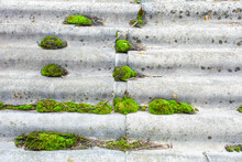 Asbest Or Asbestos With Moss A...