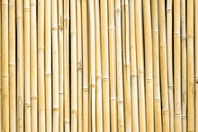Bamboo Wall Background. Dry Ba...