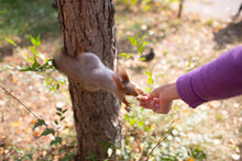 Squirrel Eating A Peanut At Ou...
