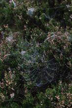 Vertical Shot Of Spider Webs On Plants