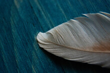 White Bird Feather On Blue Woo...